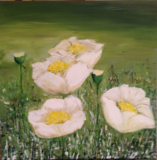 White-poppies.jpg